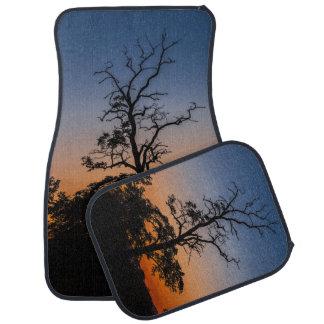 Tapis De Voiture Arbre sur un arrière - plan de coucher du soleil