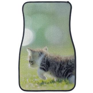 Tapis De Voiture Chat de bébé fonctionnant sur le champ d'herbe