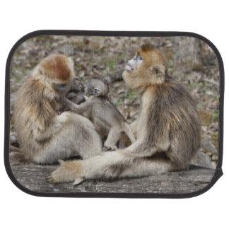 Tapis De Voiture Deux singes d'or femelles avec des nouveaux-nés