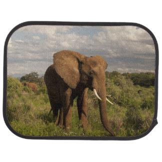 Tapis De Voiture Éléphant africain, africana de Loxodonta, dans a