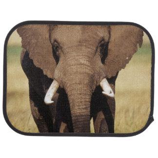 Tapis De Voiture Éléphant de Bush d'Africain