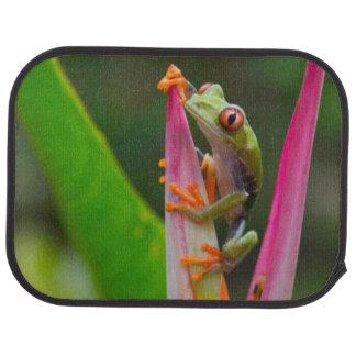 Tapis De Voiture grenouille d'arbre de Rouge-oeil, Costa Rica 2