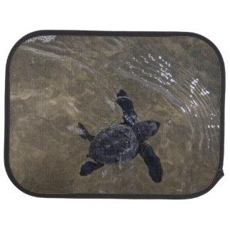Tapis De Voiture Hatchlings 2 de tortue