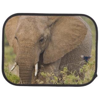 Tapis De Voiture L'Afrique. Le Kenya. Éléphant chez Samburu NP