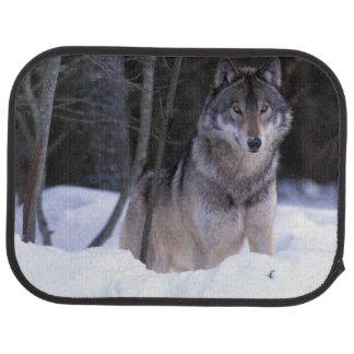 Tapis De Voiture L'Amérique du Nord, Canada, Canada oriental, loup
