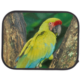 Tapis De Voiture Le Costa Rica, arums Ambigua, grand Macaw. vert