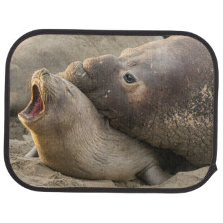 Tapis De Voiture Le joint d'éléphant masculin donne la morsure
