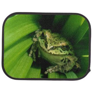 Tapis De Voiture Les Etats-Unis, Orégon, Treefrog dans le Hellebore