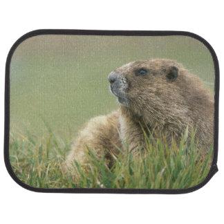 Tapis De Voiture Les Etats-Unis, Washington, NP olympique, Marmot
