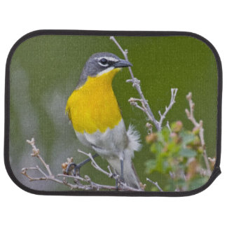 Tapis De Voiture Les Etats-Unis, Wyoming, Icteria Jaune-breasted 2