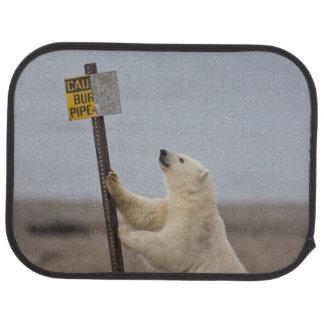 Tapis De Voiture L'ours blanc se penche sur le signe pour le tuyau