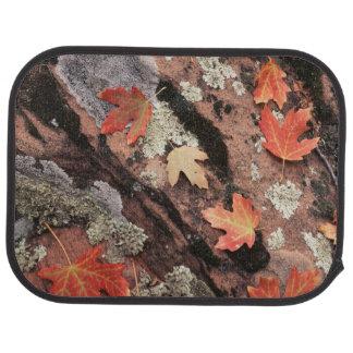 Tapis De Voiture L'Utah, parc national de Zion, motifs d'automne