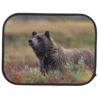 Tapis De Voiture Na, Etats-Unis, Alaska, Denali NP, ours gris
