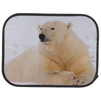 Tapis De Voiture ours blanc, maritimus d'Ursus, se reposant sur