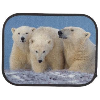 Tapis De Voiture ours blanc, maritimus d'Ursus, truie avec des