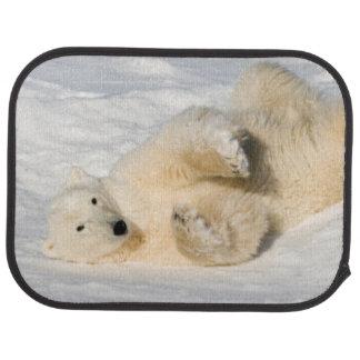 Tapis De Voiture Ours blanc près de baie de Hudson