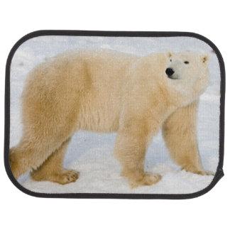 Tapis De Voiture Ours blanc près de la baie de Hudson 2