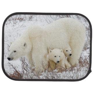 Tapis De Voiture Ours blancs femelles et deux petits animaux