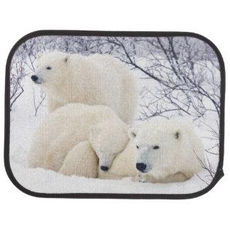 Tapis De Voiture Ours blancs femelles et deux petits animaux 3