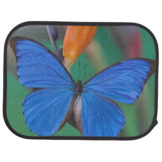 Tapis De Voiture Photographie de Sammamish Washington de papillon