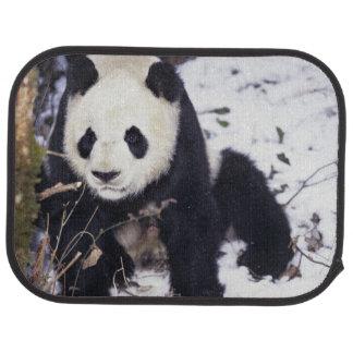 Tapis De Voiture Province de l'Asie, Chine, Sichuan. Panda géant