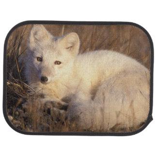 Tapis De Voiture renard arctique, lagopus d'Alopex, manteau