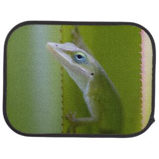 Tapis De Voiture Un anole vert est un lézard arborescent