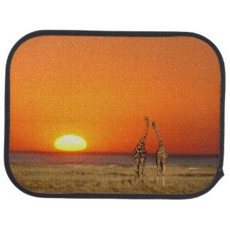 Tapis De Voiture Un couple de girafe entre dans le coucher du