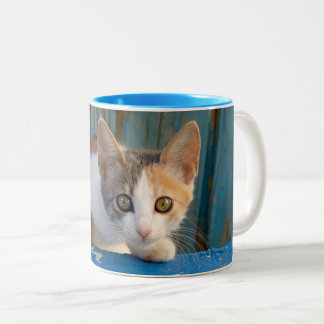 Tasse 2 Couleurs Photo curieuse drôle de yeux de calicot de chaton