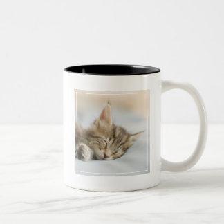 Tasse 2 Couleurs Sommeil de chaton de ragondin du Maine