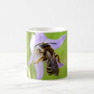 Tasse aux pieds velue d'insecte d'abeille de fleur