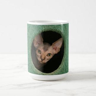 Tasse avec un chaton mignon de sphynx