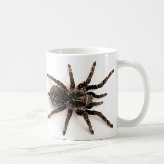 Tasse d'araignée de tarentule