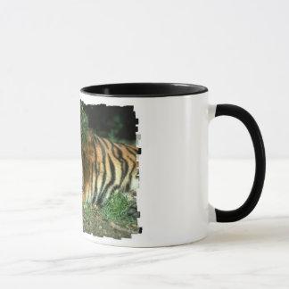 Tasse de café de tigre de Bengale