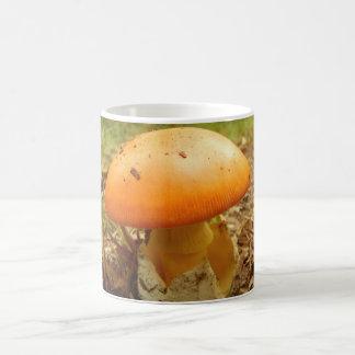 Tasse de champignon de Césarée d'amanite