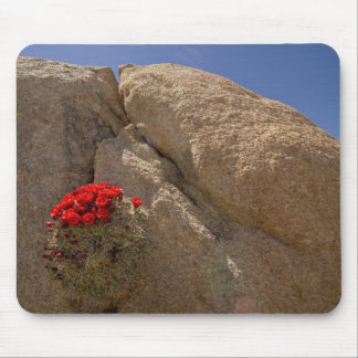 Tasse de claret ou cactus de monticule de Mojave e Tapis De Souris