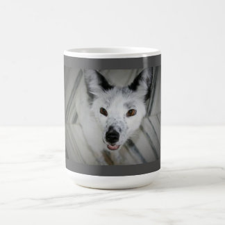 Tasse de Fox - Boris