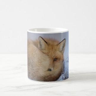 Tasse de Fox, tasse rusée, renards, nature, faune