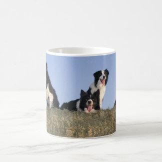 Tasse de photo d'amoureux de les chiens de border