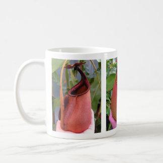 Tasse de photo de bicalcarata de Nepenthes (3