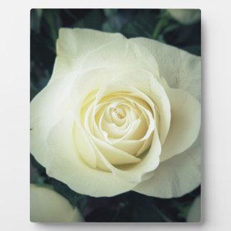 Tasse de rose blanc plaque photo