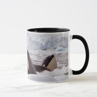 Tasse de Spyhopping d'orques
