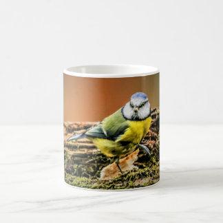 Tasse d'oiseaux - mésange bleue