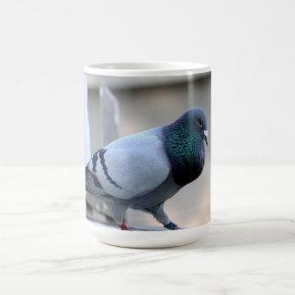 Tasse fière de pigeon voyageur
