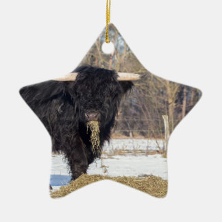 Taureau écossais de montagnard mangeant le foin ornement étoile en céramique