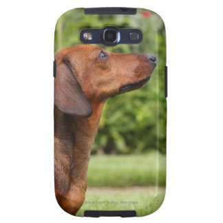 teckel miniature Lisse-haired Coque Galaxy SIII