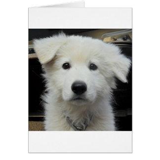 teddy_002.jpg cartes de vœux