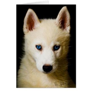 Tehya - chien de traîneau sibérien carte de vœux