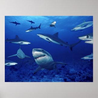 Terreurs de requins du profond poster