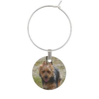 Terrier australien doux marque-verre